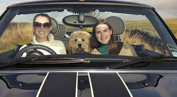 In vacanza anche gli animali domestici gli automobilisti for Costruttori domestici del nordovest pacifico