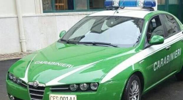 Corpo forestale ai carabinieri e le auto resteranno verdi?